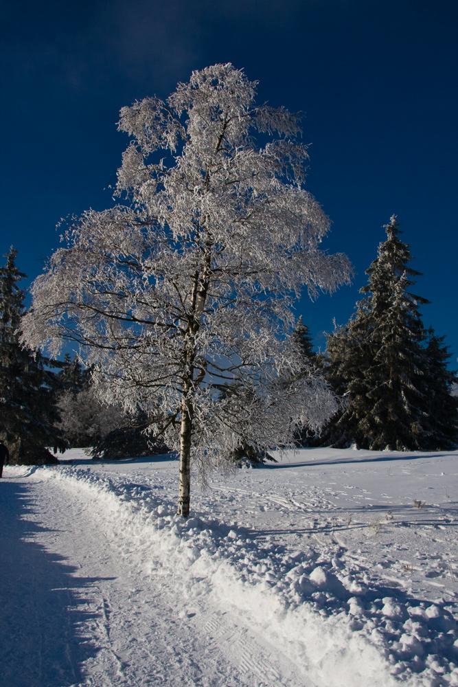 Winter am Kahlen Asten II
