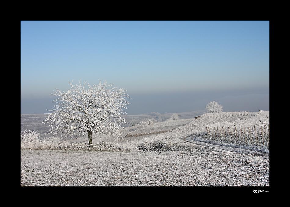Winter am Kaiserstuhl