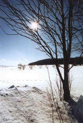 Winter am Langen Berg bei Herschdorf (154-26)
