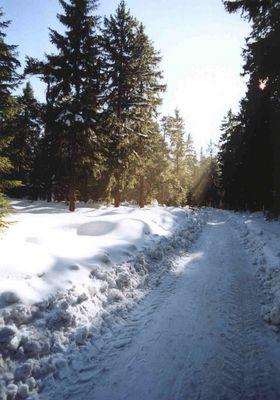 Winter am Langen Berg bei Herschdorf, Thüringen (154-31)