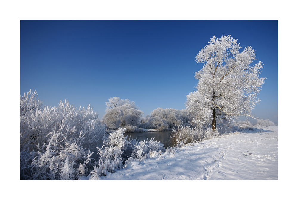 Winter am Main III