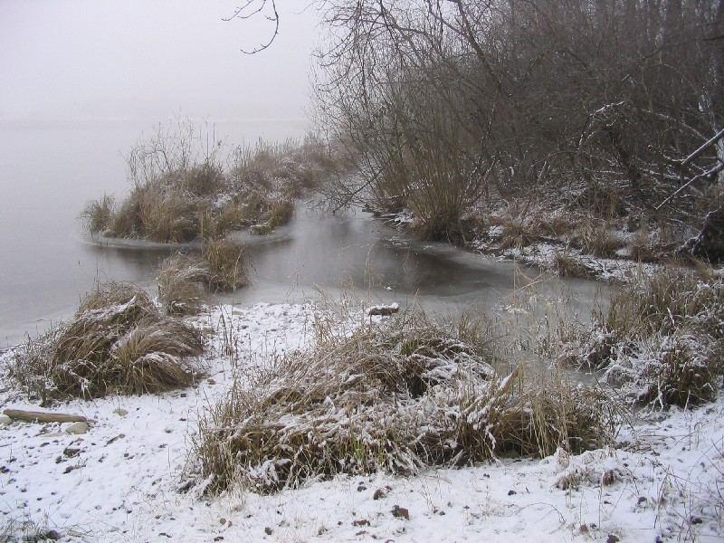 Winter am Mühlweiher 2