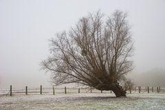 Winter am Niederrhein (2)