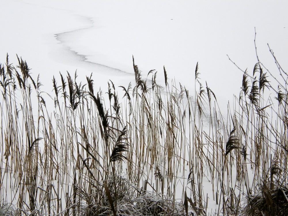 Winter am Prendener See