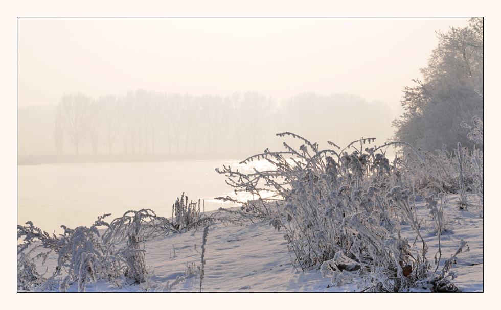 Winter am Rhein III
