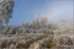 Winter am Rothaarkamm