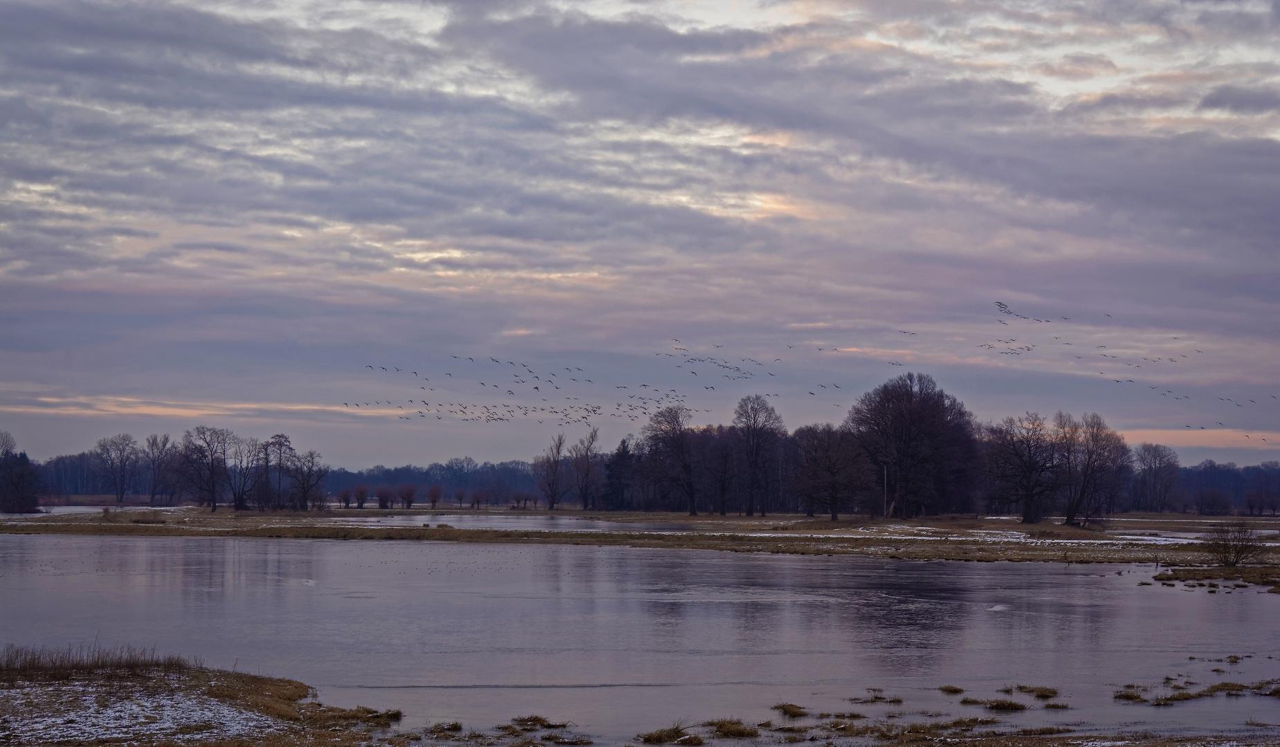 Winter am Steinhorster Becken