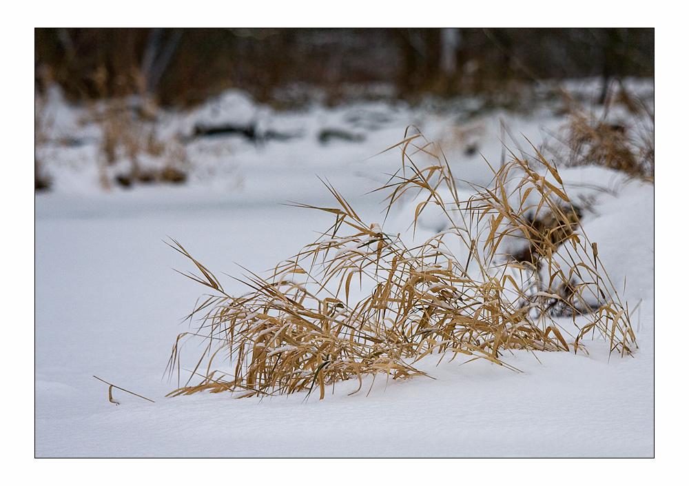 Winter am Tegeler Fliess.