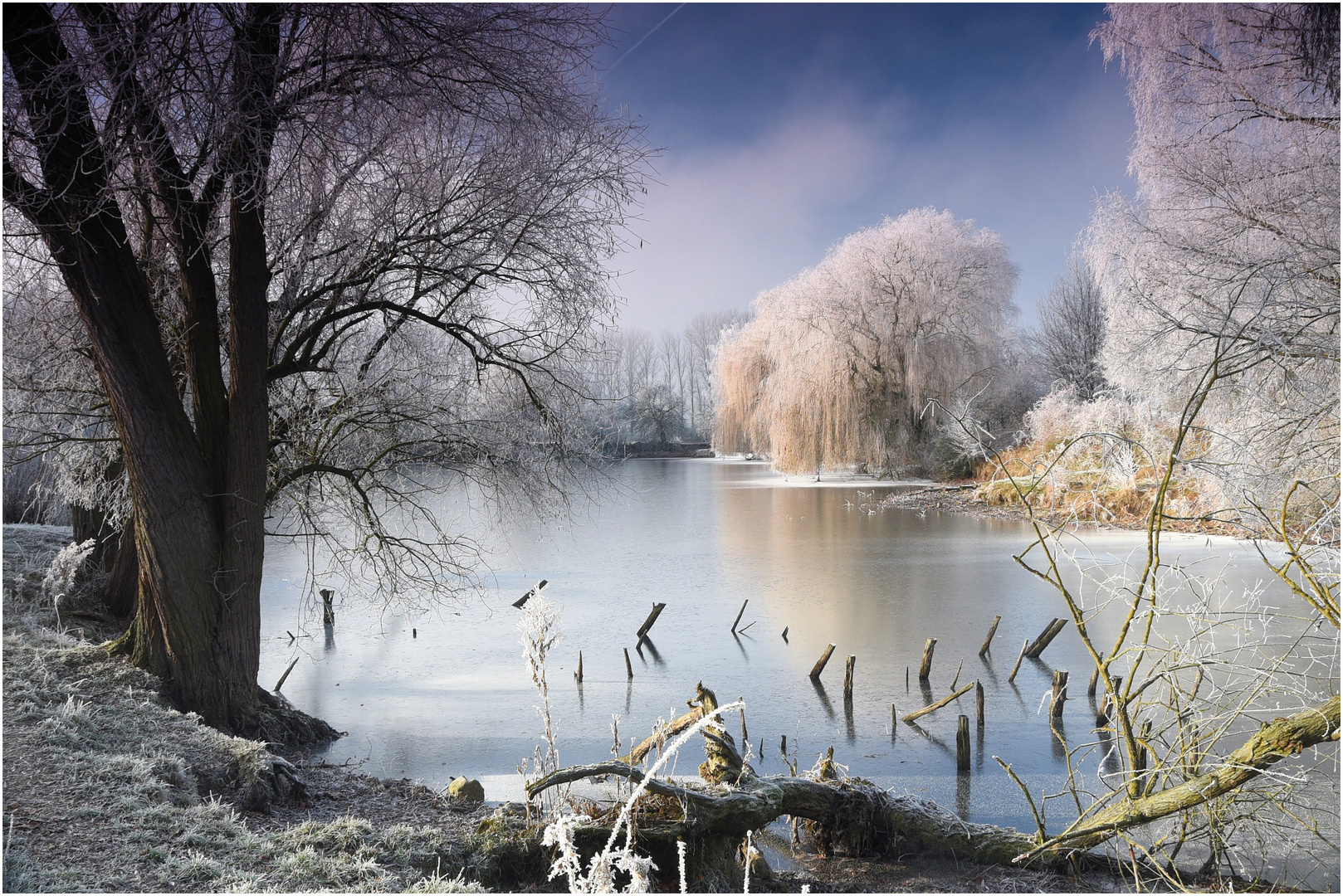 Winter Am Teich Foto Bild Landschaft Winter