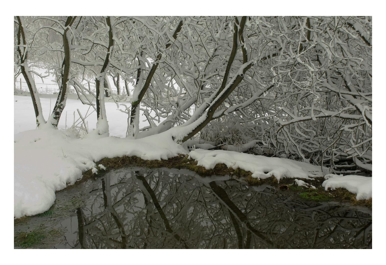 Winter am Tümpel