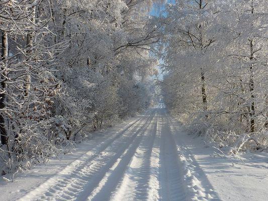 Winter am Waldau