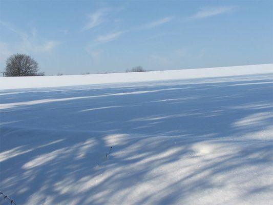 Winter am Waldrand