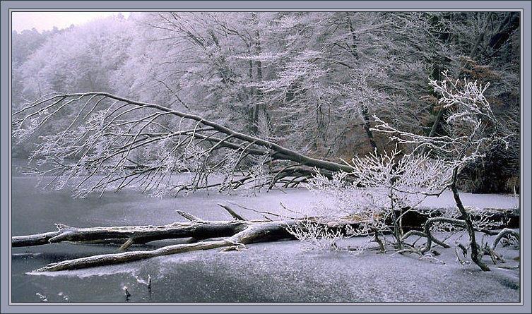 Winter am Werbellinsee