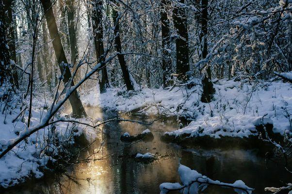 Winter an der Erft