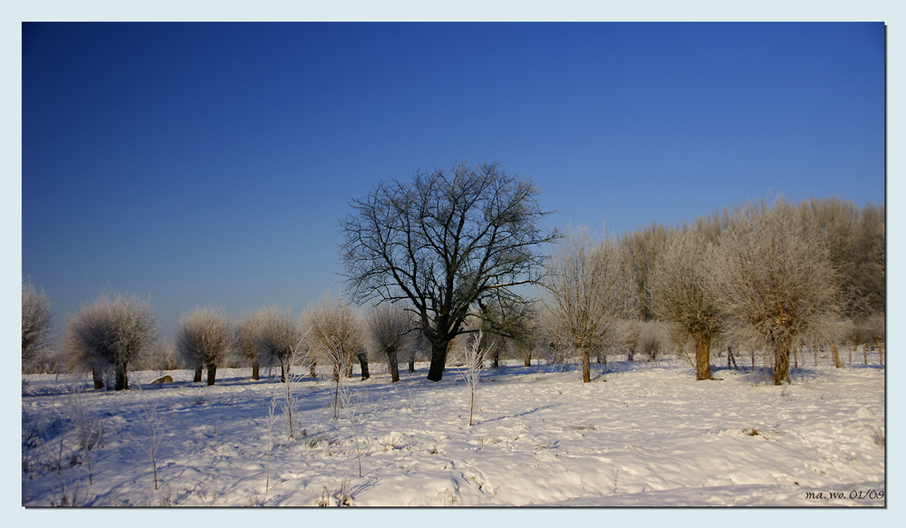 Winter an der Niers III