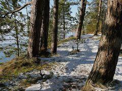 Winter an der Schlei - Foto Nr. 3