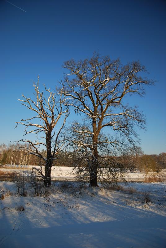 Winter an der Schwarzen Elster