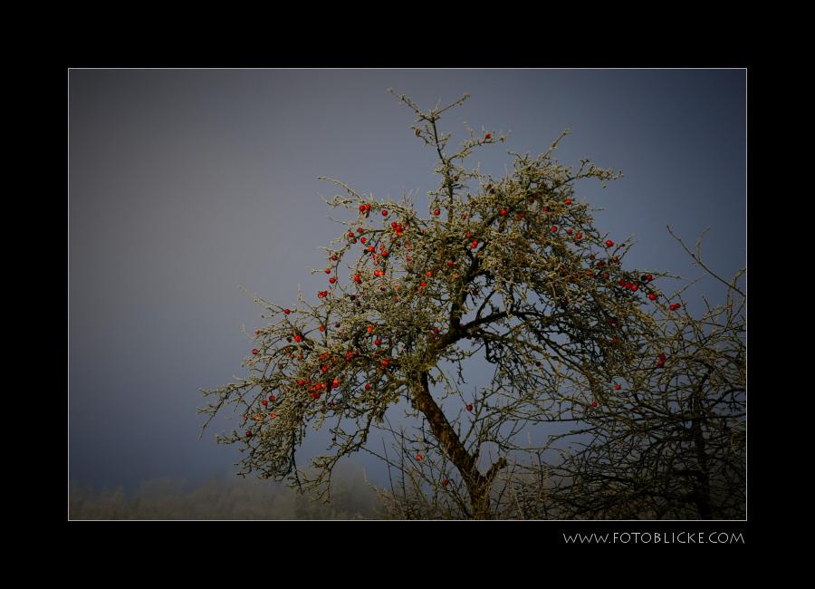 Winter Apfel