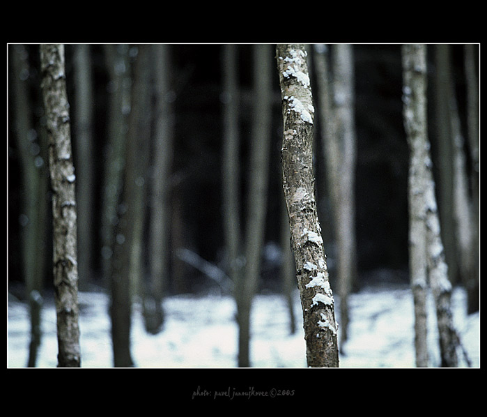 ... winter at Russian woods ...