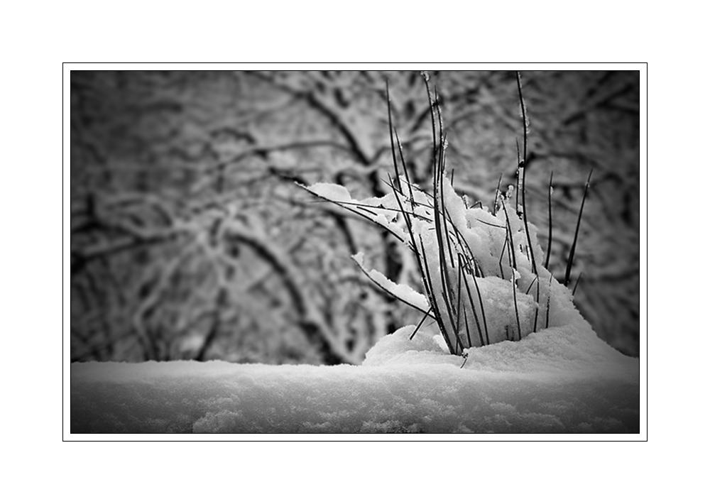 Winter auf Balkonien