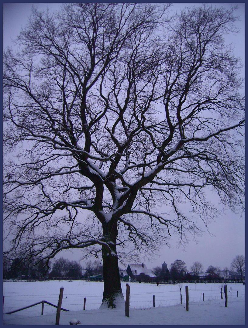 Winter auf Cappenberg
