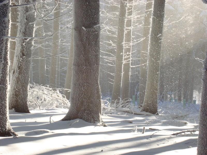 Winter auf dem Albis
