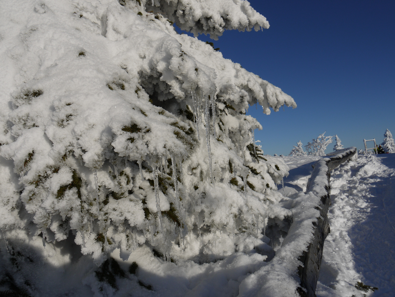 Winter auf dem großen Arber 2010