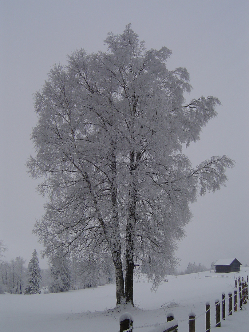 Winter auf dem Zugerberg