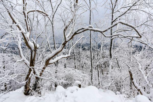*Winter auf der Hohen Acht II*