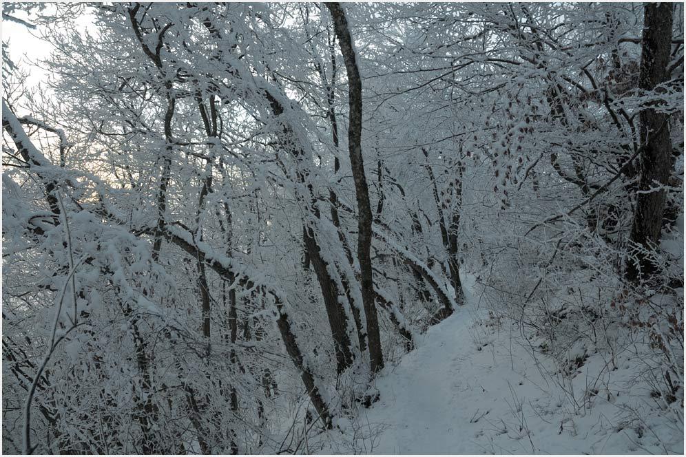 Winter auf der Lägern II