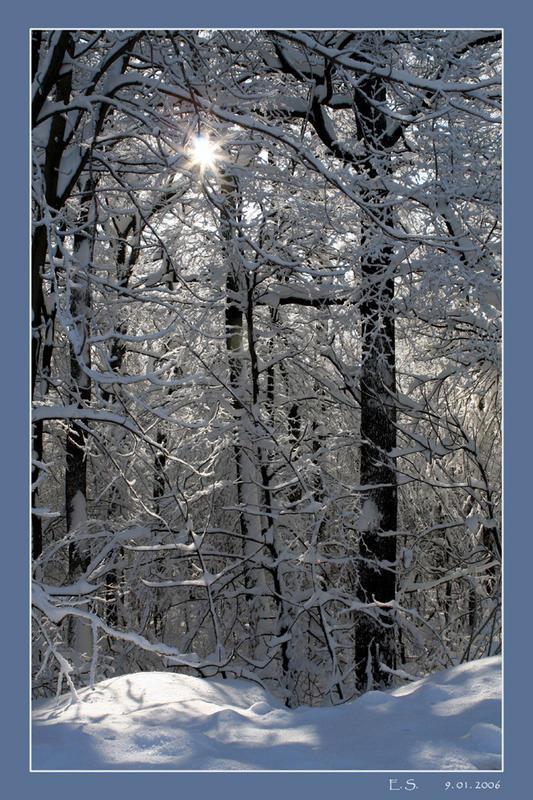 Winter auf der Wiener Höhenstraße 1