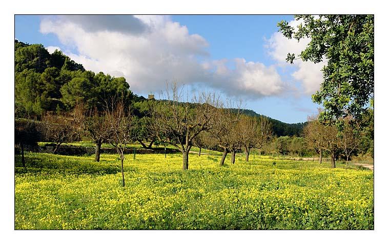 Winter auf Mallorca (3)