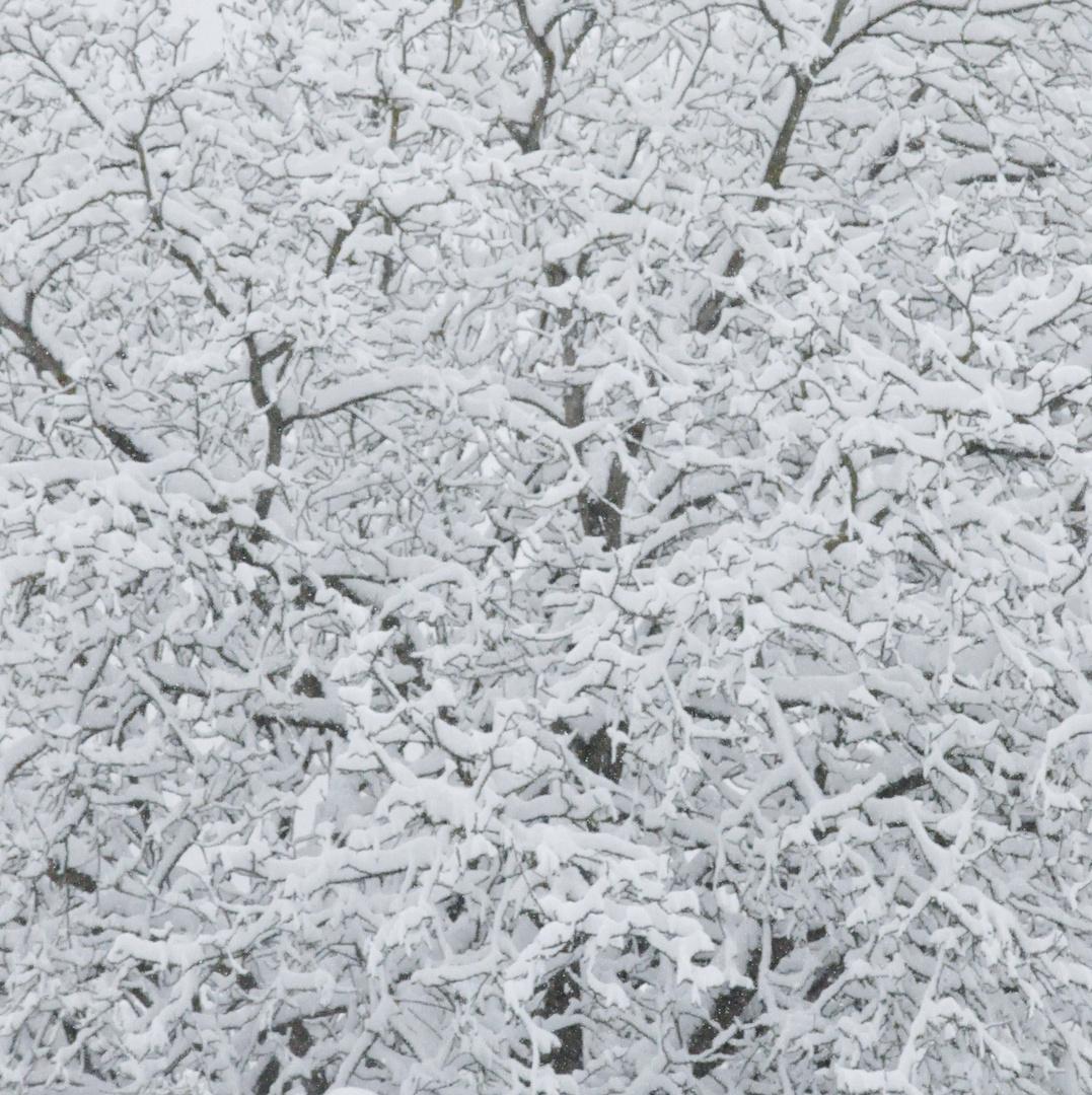 Winter-Bäume: 02