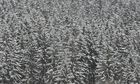 Winter-Bäume: 04
