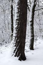 """""""Winter-Bäume - Winter-Träume 2"""""""