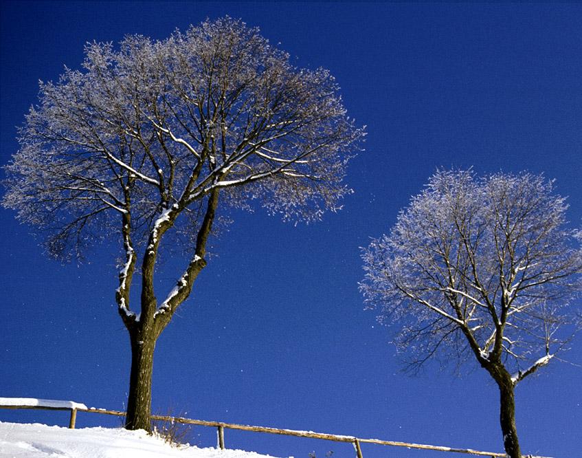 winter b ume winter tr ume 3 foto bild jahreszeiten winter verschiedenes bilder auf. Black Bedroom Furniture Sets. Home Design Ideas