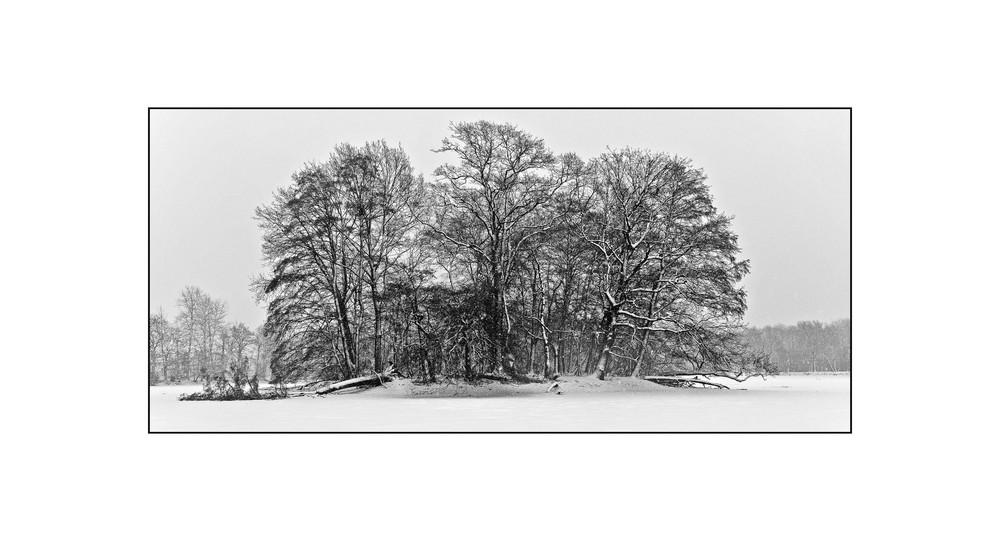 Winter-Bäume1