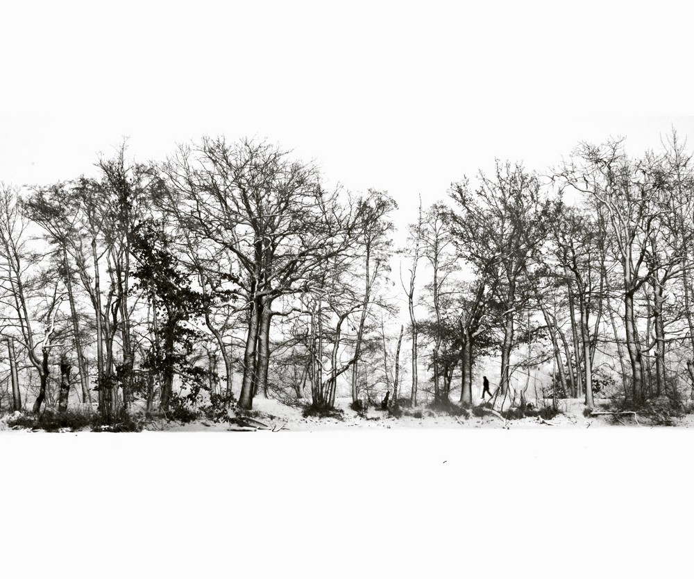 Winter-Bäume2