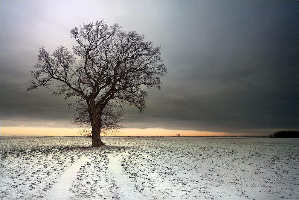 Winter Baum