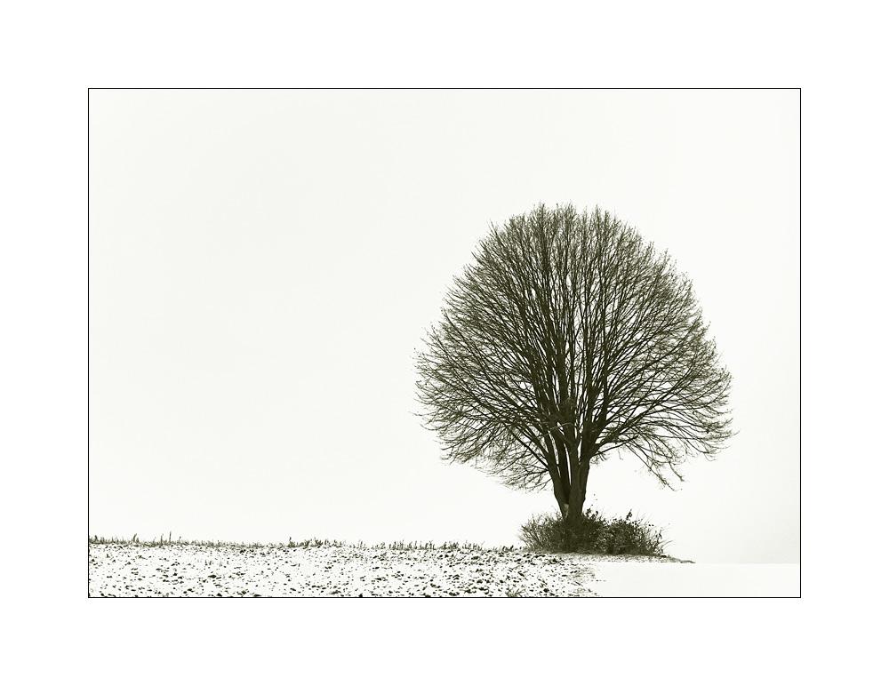 Winter-Baum-Update