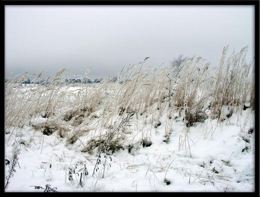Winter bei Berlin