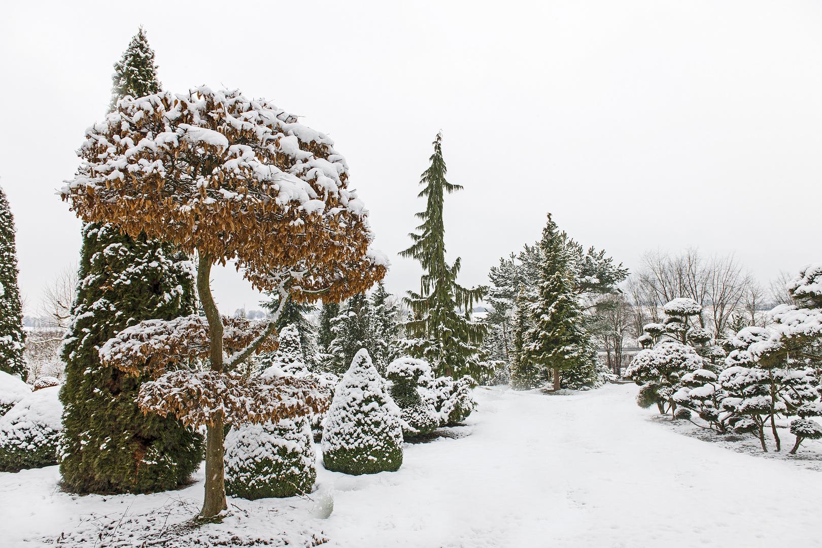 Winter bei uns - 3