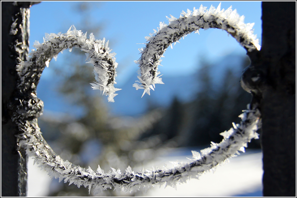 Winter-Breze
