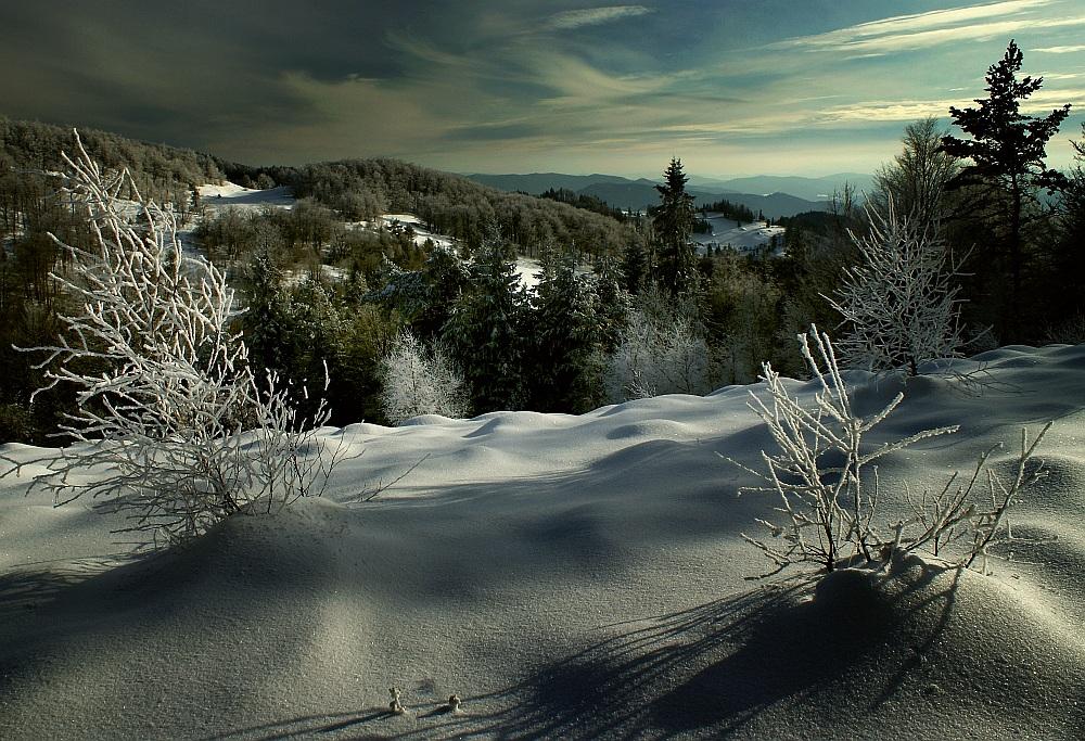 Winter chiaroscuro