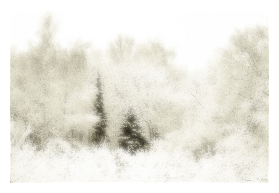 ...::: Winter :::...
