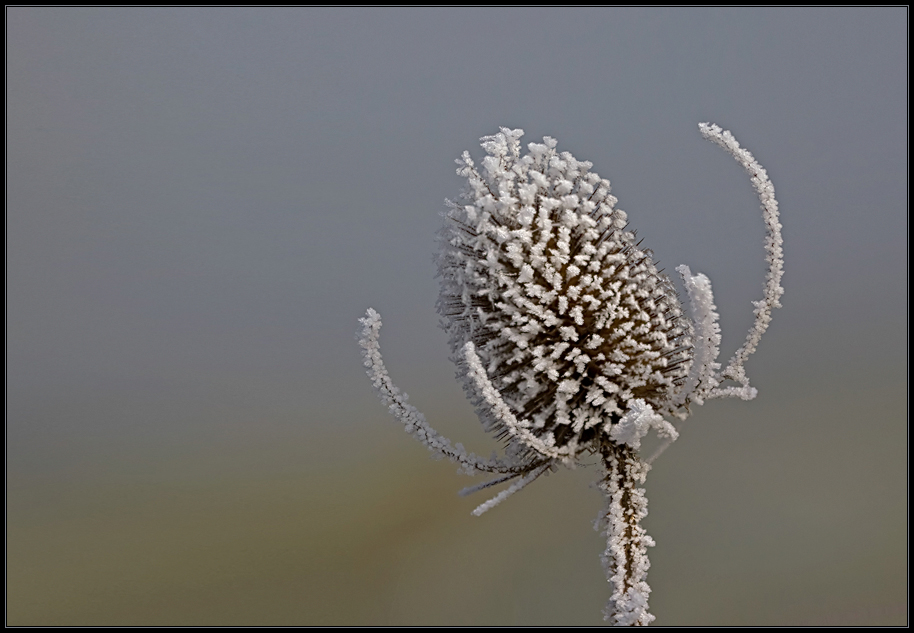 Winter-Eleganz am Wegrand (II)