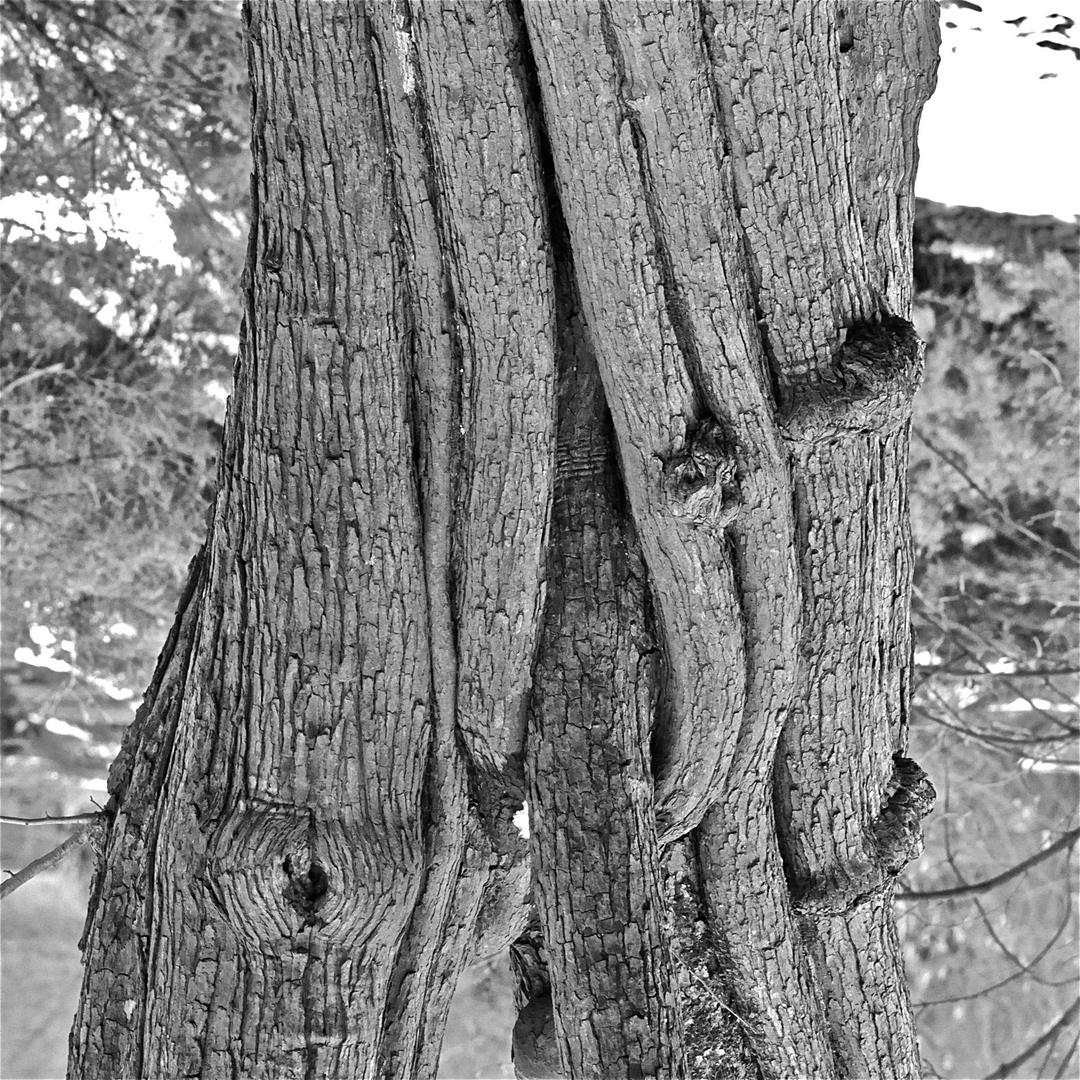 Winter-Erotik im Park - in memoriam Abe Frajndlich