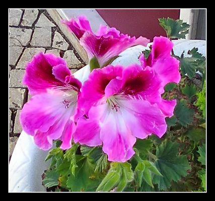 Winter flower on street for my FC friends.