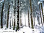 Winter forrest