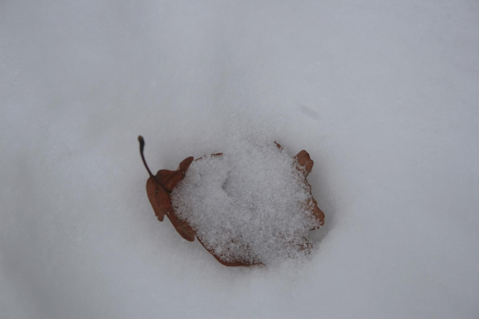 Winter Foto2